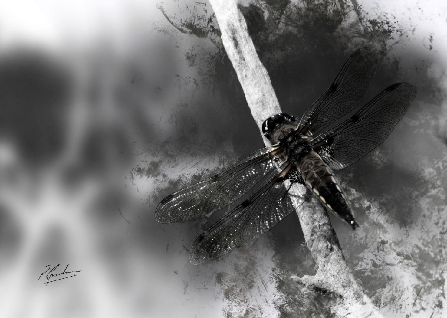 Dragonfly in Ink by Ronnie B Goodwin