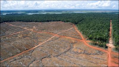 Perluas 2400 Hektar di Merauke, Korindo Dituding Langgar Moratorium