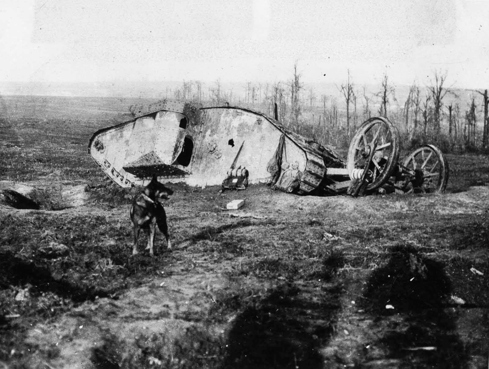 A Mark I tank lies ditched north of Bouleaux Wood on the day tanks first went into action.