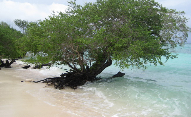 Xvlor Kasa Island is day snorkeling and watching maleo bird overnight
