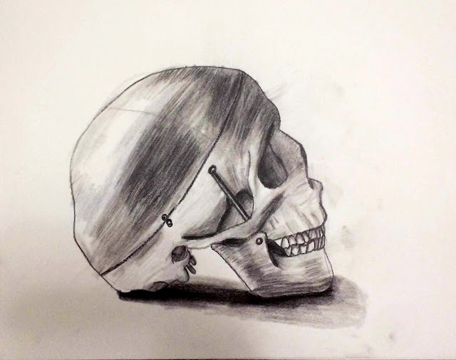 High contrast black and white drawing of a human skull, in profile view.