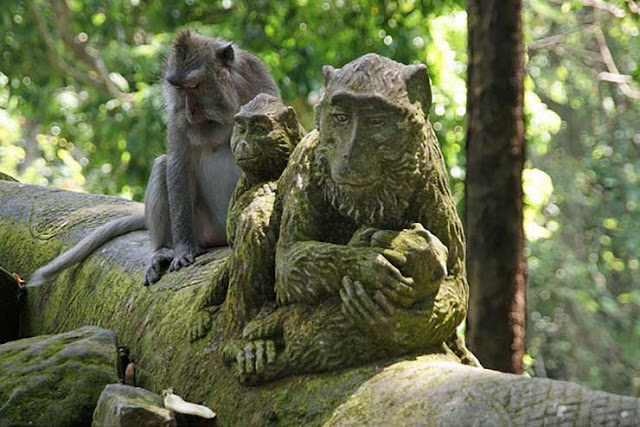 monkey forest,monkey,monkey forest bali,monkey forest ubud,forest,ubud monkey forest,monkey forest ubud bali,monkeys,monkey attack,ubud monkey forest (tourist attraction),bali monkey forest,ubud sacred monkey forest,sacred monkey forest bali,monkey (animal),monkey forrest,monkey forest bite,moneykey forest,visit monkey forest,midway - monkey forest,midway monkey forest,sacred monkey forest,bali indonesia