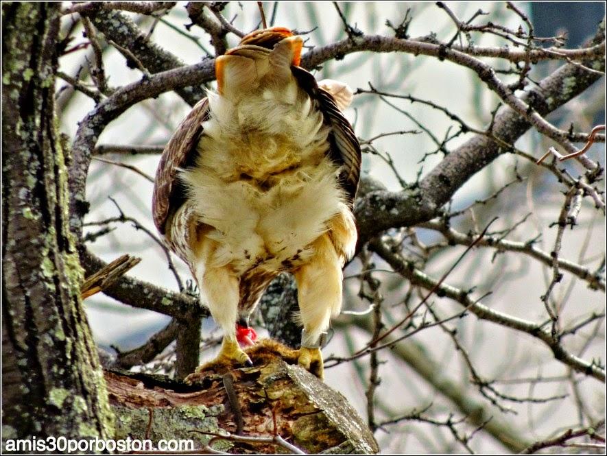 Águilas Por Mi Ventana