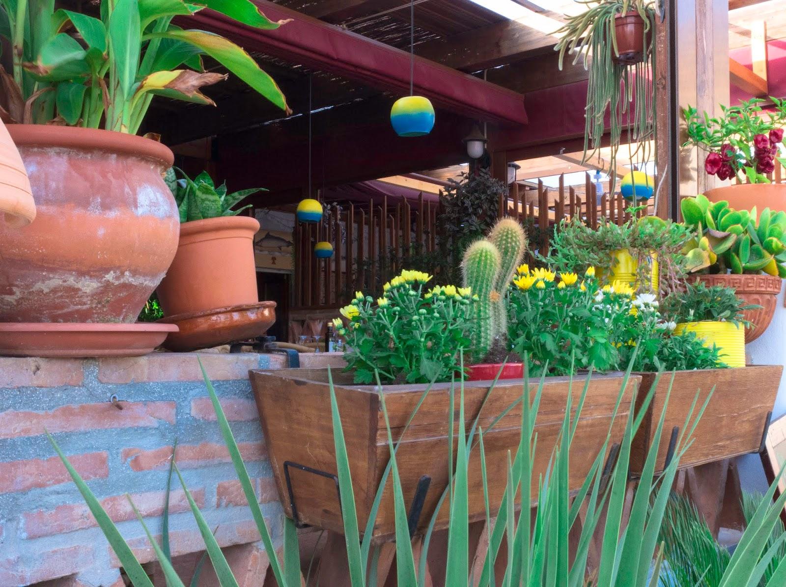 Cactus y plantas, San José , Almería 2015