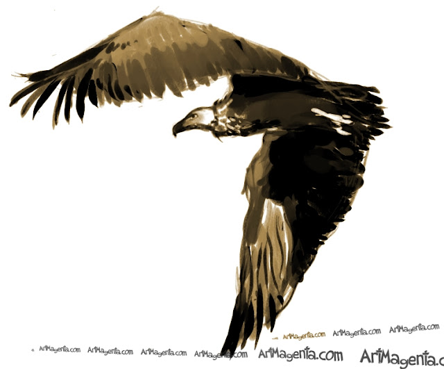 Cinereous Vulture sketch painting. Bird art drawing by illustrator Artmagenta
