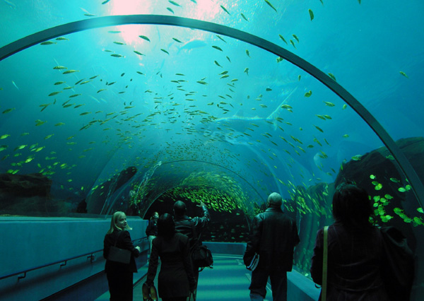 Interesting Things Do You Know World S Largest Aquarium