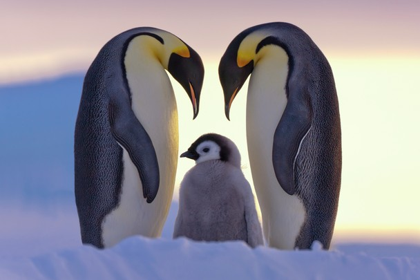 National Geographic Photo Contest 2011 - Love of Parents