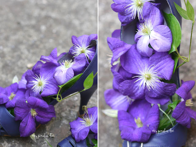 using clematis in flower arrangements, clematis mov lila in pantofi