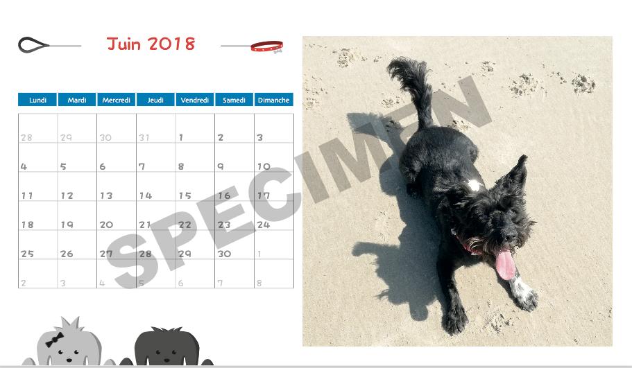 canin sans famille vente du calendrier 2018 de canin sans famille. Black Bedroom Furniture Sets. Home Design Ideas