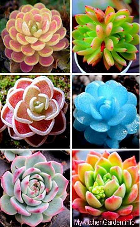 Succulents in Vertical Gardening
