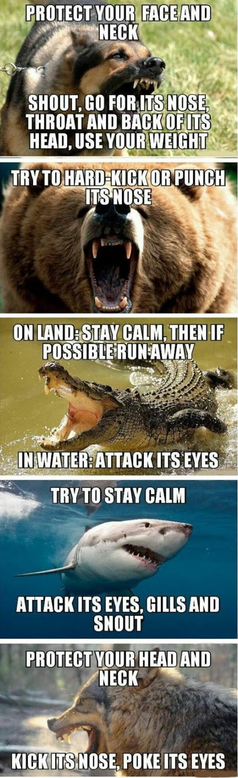 Fighting Off Wild Animals