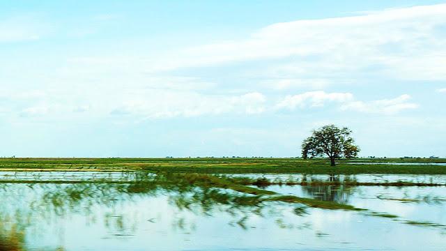 Изображение одинокого дерева и поля, залитых водой