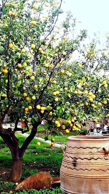 Greek lemons Photo  - Greeker than the Greeks