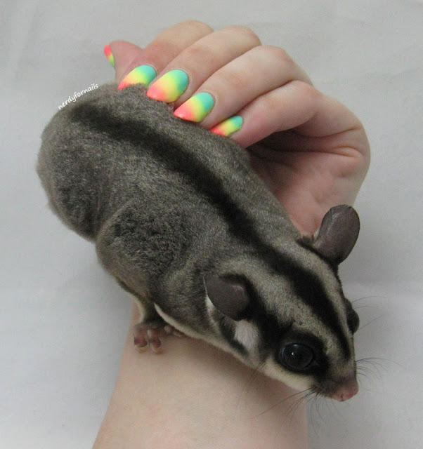 Summer Neon Gradient Nails- My Nails and My Sugar Glider