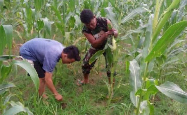 Serka L. Sinurat Dampingi Petani Membersikan Gulma di Desa Tanjung Raja