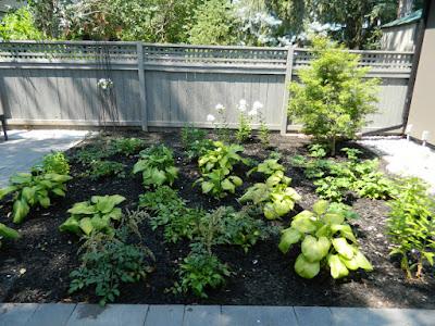 the danforth garden design after by garden muses--not another Toronto gardening blog