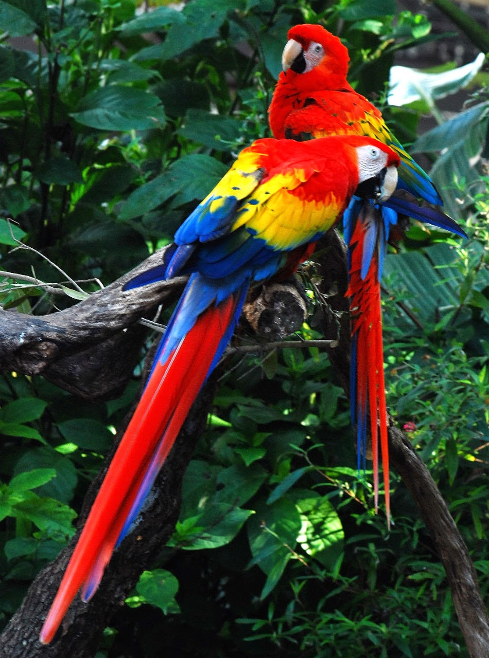 The Most Beautiful Exotic Birds In The world   Mathias Sauer