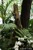 Ferns, orchids, and a tropical feel in this woodland garden. A wooden redheaded Woodpecker adorns a tree.