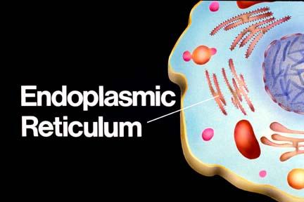 My Biology 12 Notes: 3.2 Eukaryotic Cells