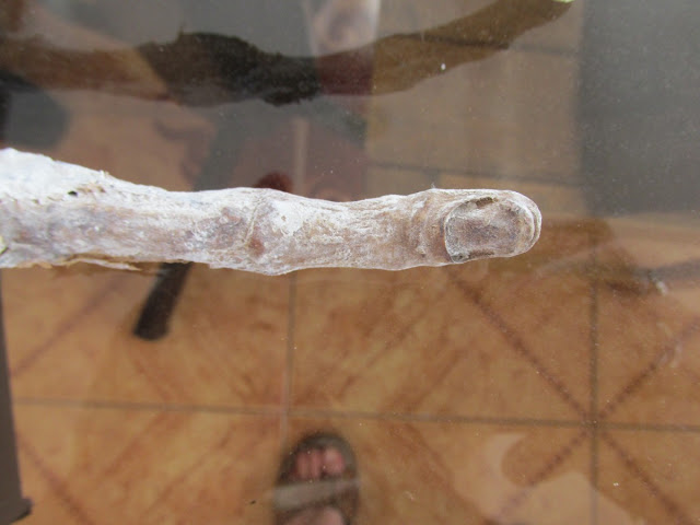 Mysterious Hand Of An 'Alien' Which Was Found On The Coast Of Peru Is Certainly Not Of Humans According To A Researcher!