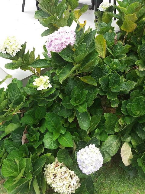 Botanical Park, Cafe Point, gunung jerai, hotels, mount jerai, Mushroom Farm, Regency Jerai Hill Resort, Telaga Tok Sheikh, The Puncak Restaurant, tourism,