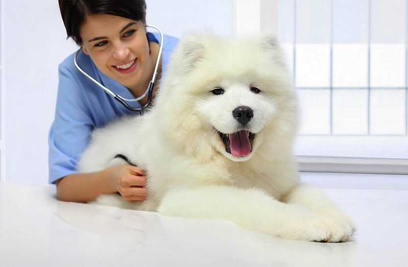 Side Effects of Dog Vaccines