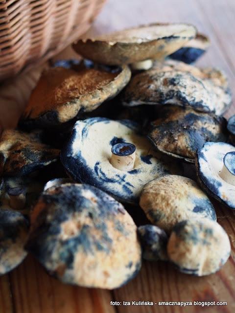 piaskowiec modrzak, grzyby, las, grzybobranie, grzyby jadalne, atramenciaki, siniaki, niebieskie grzyby, tarta z piaskowcami
