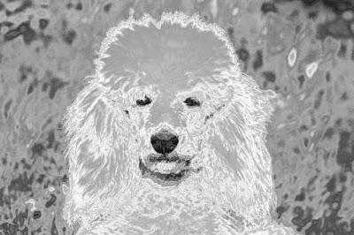 chien psychédélique noir et blanc musique podcast