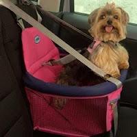 Cadeirinha de carro para cães