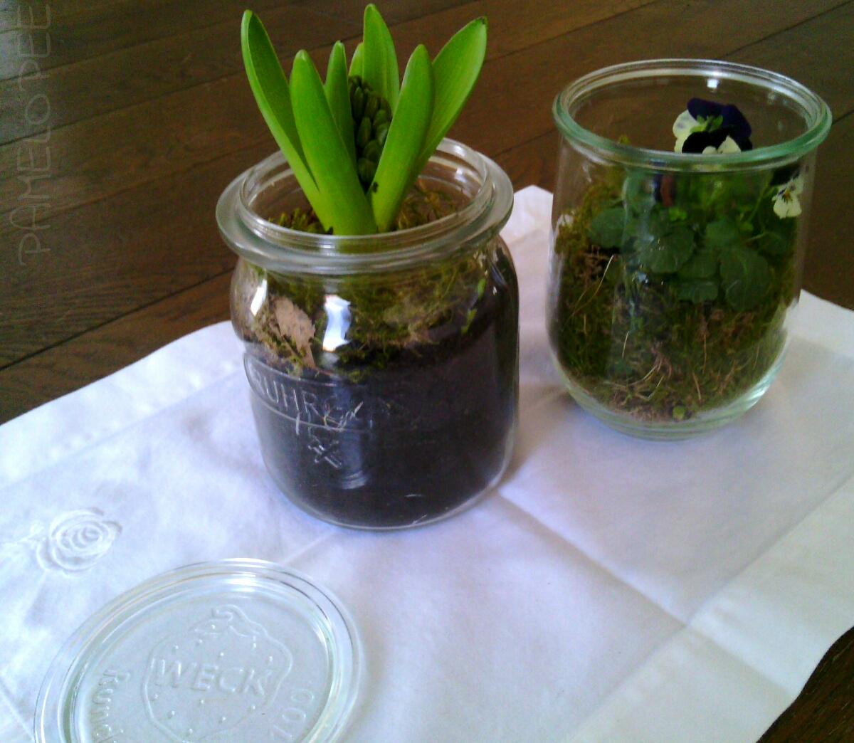 pamelopee: Blumen im Einmachglas