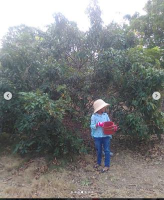 Wisata Kebun Lengkeng/kelengkeng Bintan Desa Penghujan