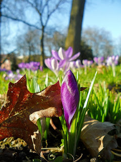 Best must read Gardening blogs from the UK