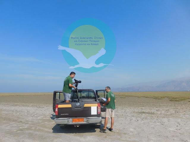 Θεσπρωτία: Παγκόσμιο Πρόγραμμα Καταμέτρησης Παρυδάτιων Πουλιών