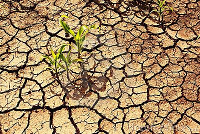 sonhar com terra seca