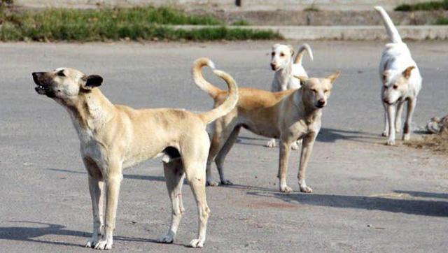 Lone Star Parson Urban Dog Hell Strikes Dallas