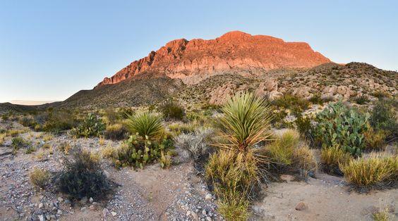 Chihuahuan Desert