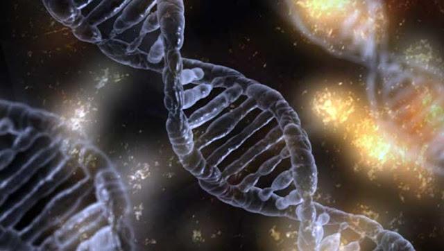 dna mutasi