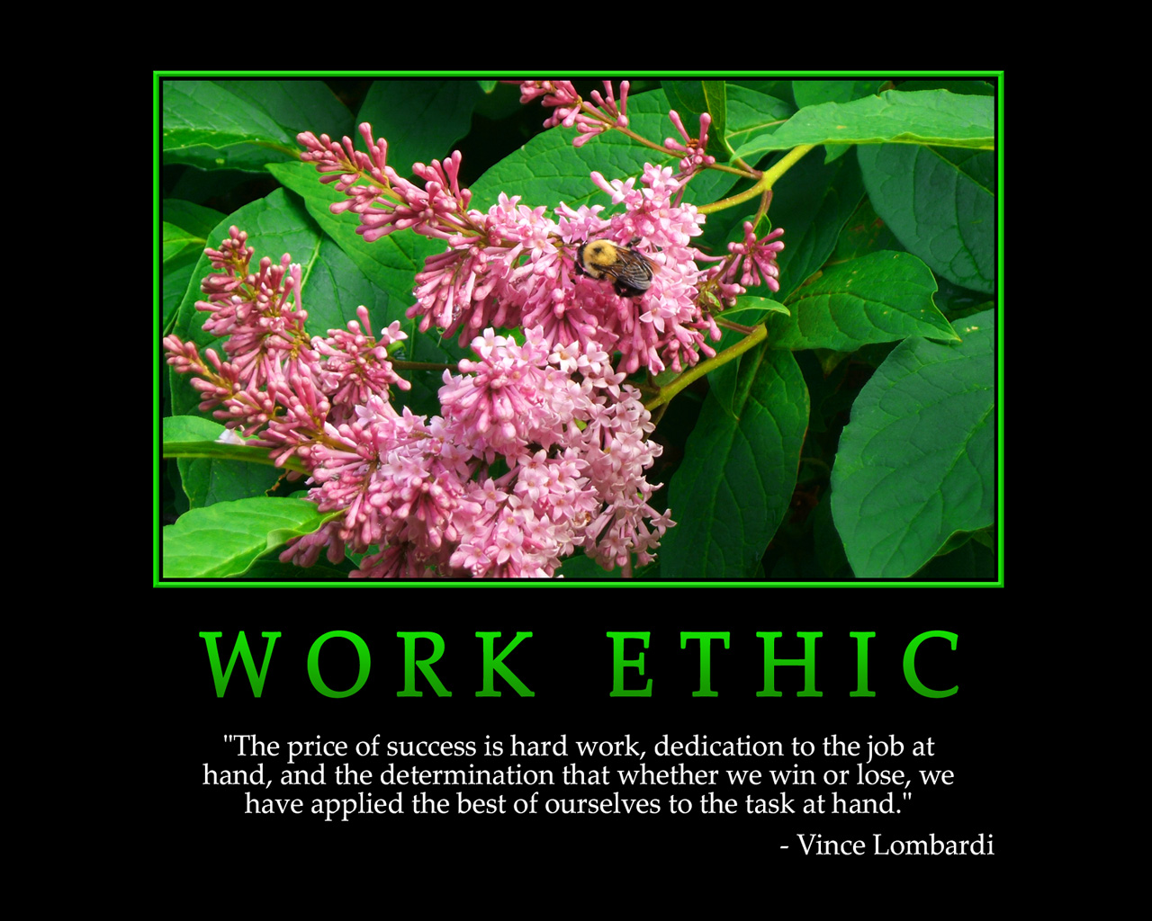 100 Hard Work Quotes to Achieve All You Want in Life  For Work Motivational Quotations