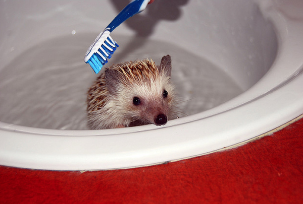 funny animal pictures, funny animals taking baths, animals taking baths, cute animal pictures, adorable animals, animals in baths