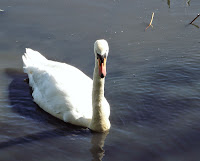 Swans Tyneside