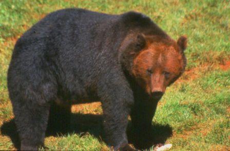 Lista animales salvajes yahoo dating 7
