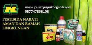 cara ampuh membasmi hama dan penyakit padi