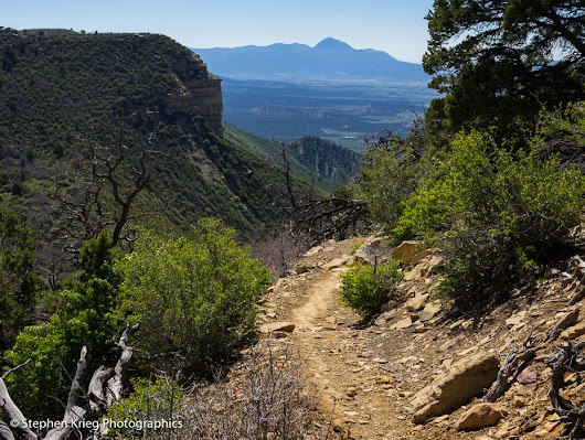 Mesa Verde: the Green Table-Mountain is Greening Up