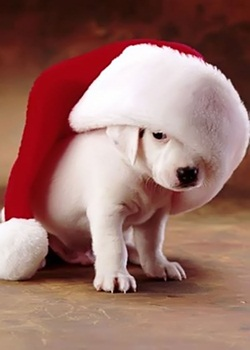 Puppy Image for Christmas