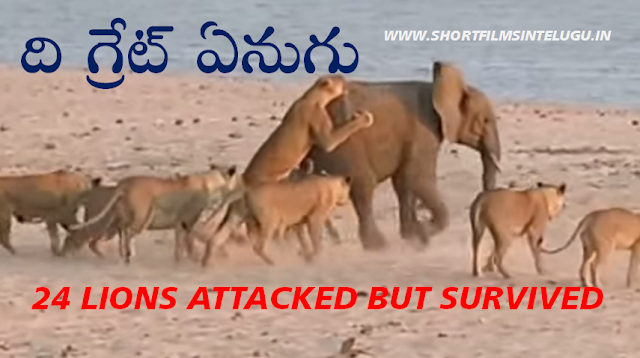 ELEPHANT LIONS 24 ATTACK VIDEO PICS