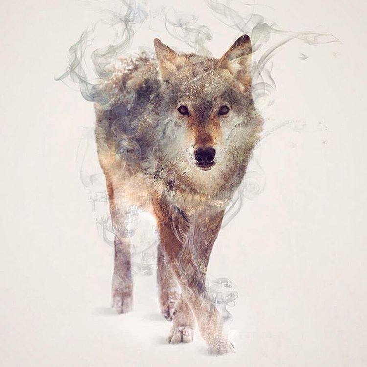 03-Wolf-Daniel-Taylor-Ghostly-Animals-in-Manipulated-Photographs-www-designstack-co