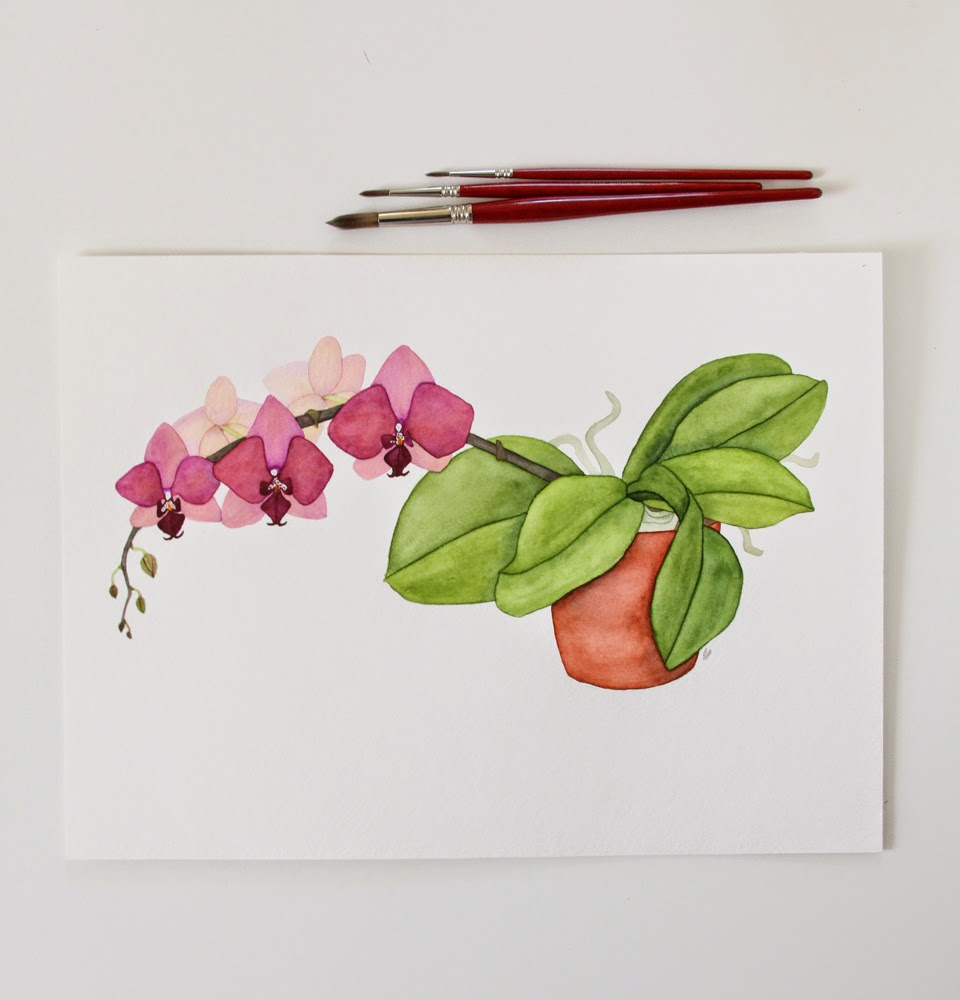watercolor moth orchid in a clay pot