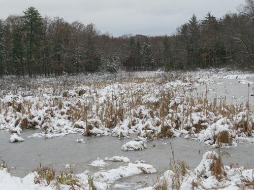 frozen wetland