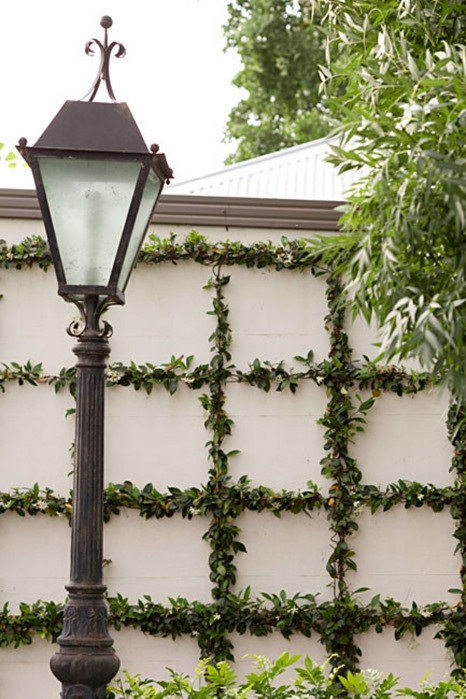 Friday Favorites Trellised Vines And Espaliered Trees
