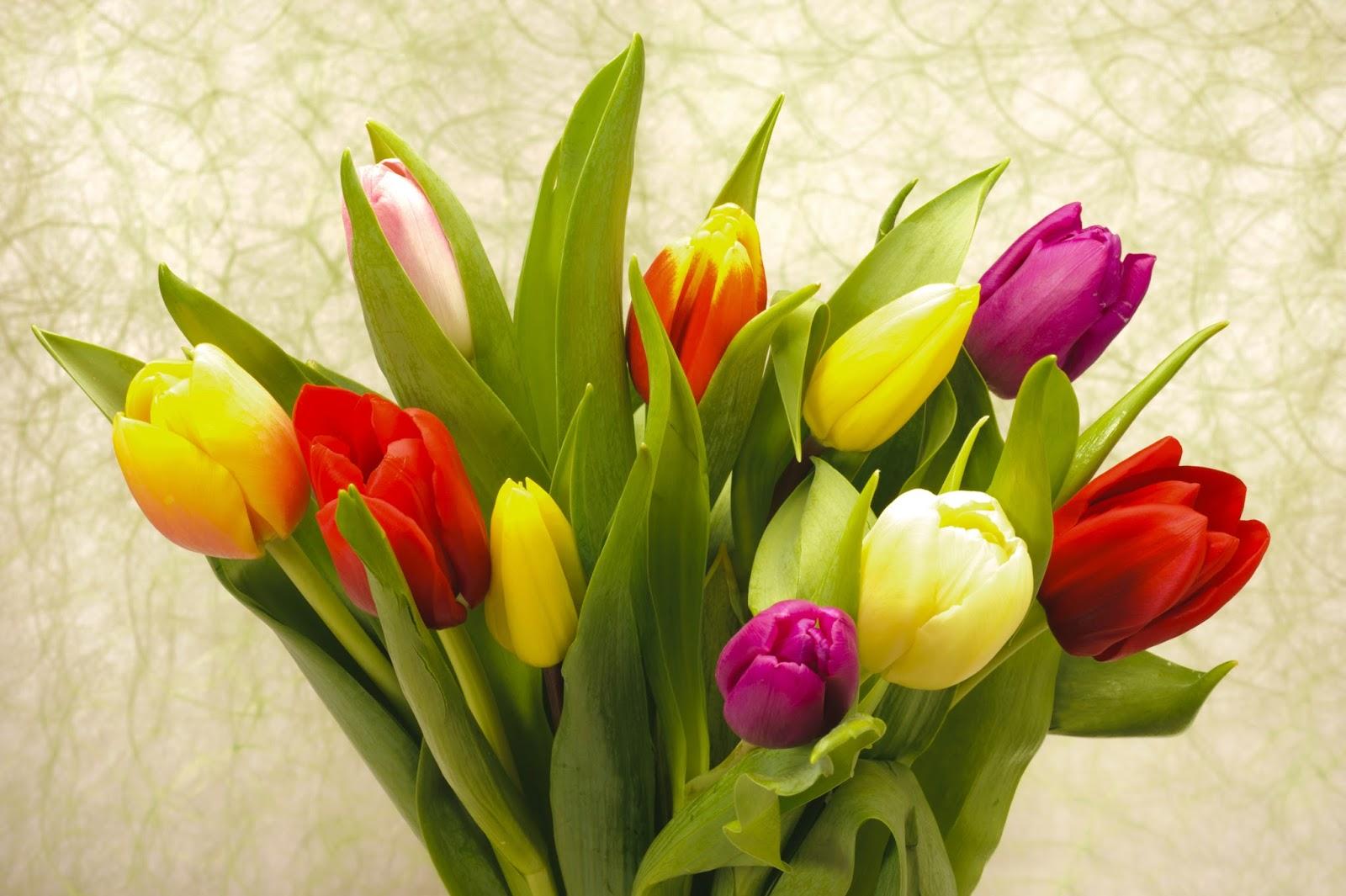 10 Fotos Gratis De Flores